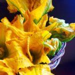 Flores de calabacín: diferencias entre machos y hembras